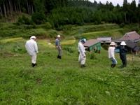 畑の棚田 植生調査と草刈りのお手伝い