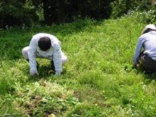 畑の棚田で草刈りをしました